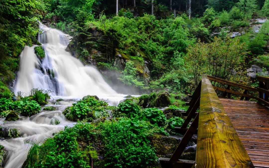 Business und Natur im Südschwarzwald – Trainieren|Erleben|Genießen